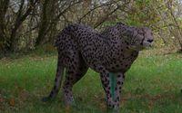 Gepard-6063