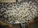 Gepard-6064